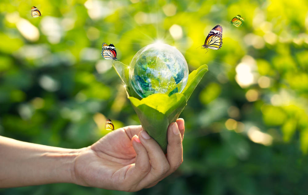 El respeto por el medio ambiente como valor añadido