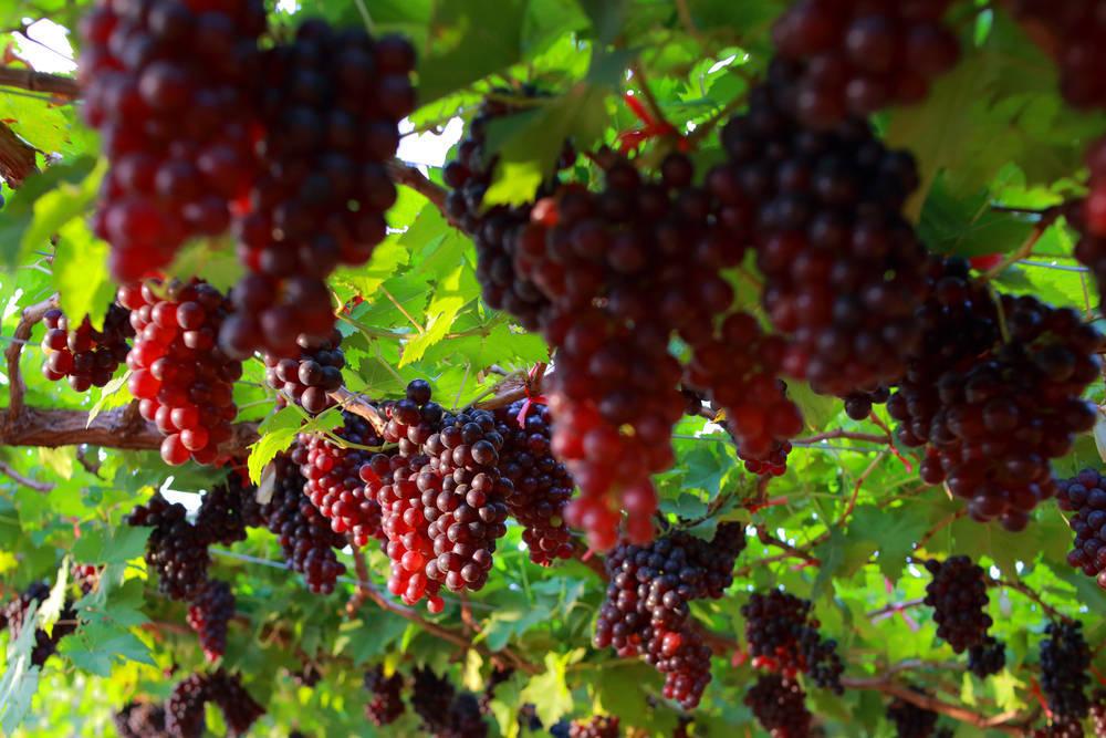 España, cada vez más aficionada al vino